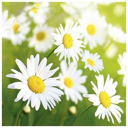 Salvete troslojne 33x33cm pk20 Lucky daisy Herlitz 11309093