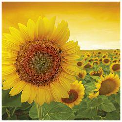 Salvete troslojne 33x33cm pk20 Sunshine Herlitz 11365004