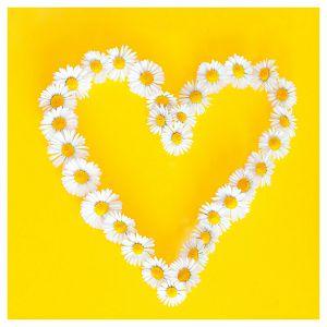 Salvete troslojne 33x33cm pk20 Daisies in love Herlitz 11309622
