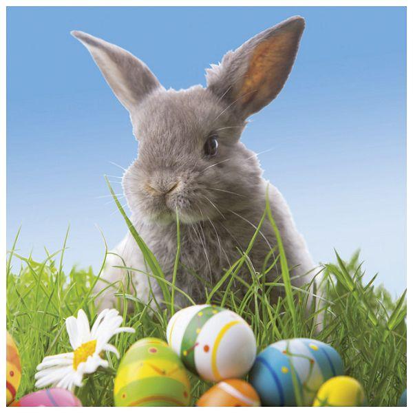 Salvete troslojne 33x33cm pk20 Cute bunny Herlitz 11439635